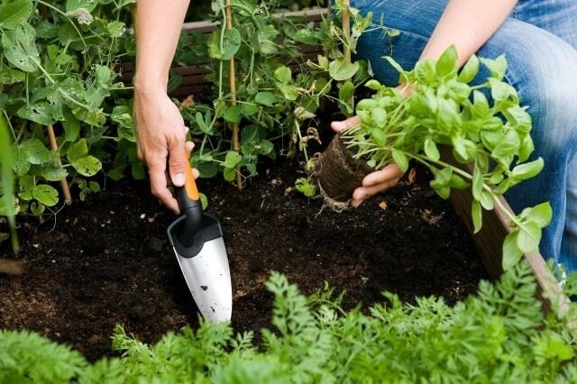 Gartenarbeit mit der Pflanzkelle